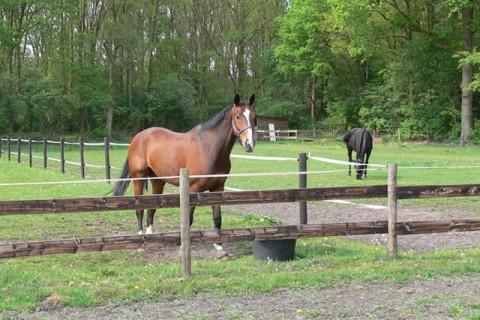 Camping Alkenhaer paardenfaciliteiten