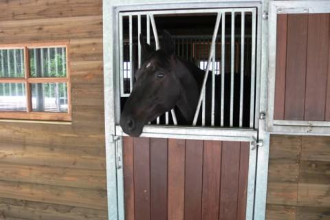 Camping Alkenhaer paardenbox