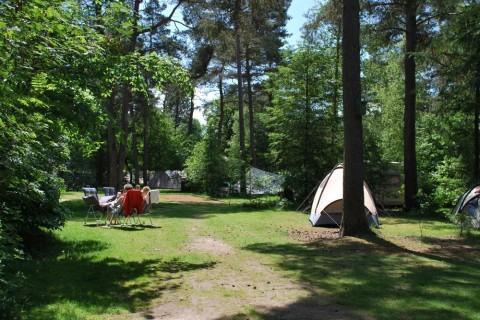 Camping Diever kampeerplaats basis