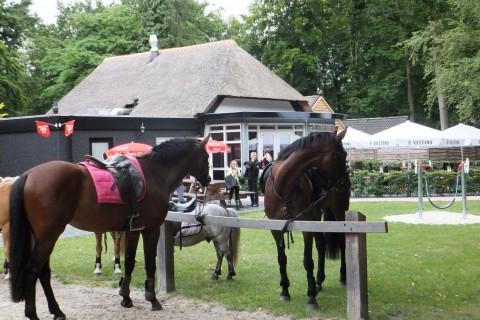 Bospaviljoen Appelscha paardrijden