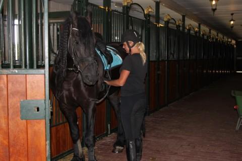 Park Drentheland paardenstalling