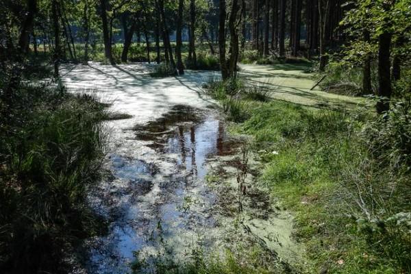Natuurgebieden Weerribben Dwingelderveld Holtingerveld
