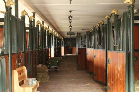 Park Drentheland Luxe Paardenboxen
