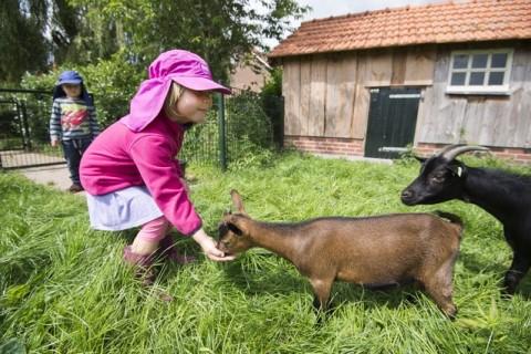 Camping De Goede Weide kinderboerderij