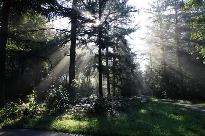 Zon door bomen bij Oude Willem fotograaf Fred en Elly Ham