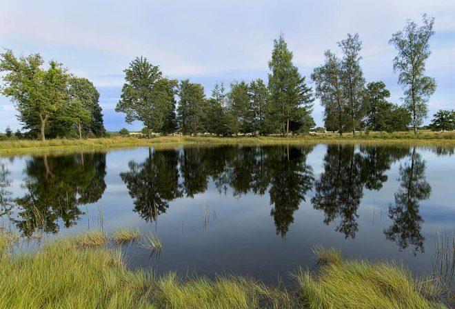 Meertje in het Drents-Friese Wold fotograaf Bert van Kordelaar