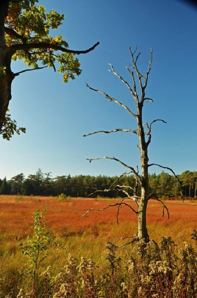 Kale boom bij begroeid ven fotograaf Rien van Boven