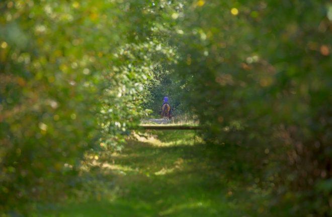 Paardrijden in het bos omgeving Zorgvlied fotograaf Henk de Vos
