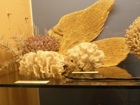 Compositie van koralen Miramar Zeemuseum Vledder fotograaf J.A. van Houttum-Lankhorst