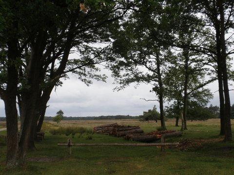 Landschap bomen heide gezaagde bomen fotograaf J.A. van Houttum-Lankhorst