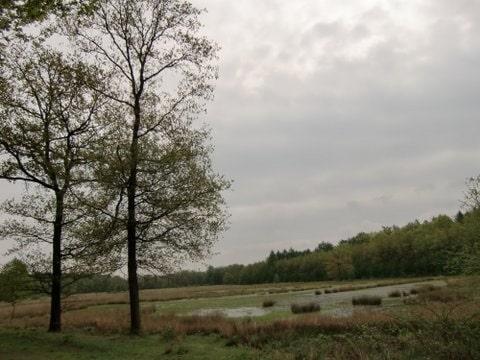 Vennetje met bomen in het Elperveen fotograaf Ina van Ederen van Betten