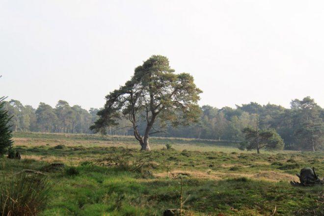 Drents Friesewold Fotograaf A T M Dongelmans 7
