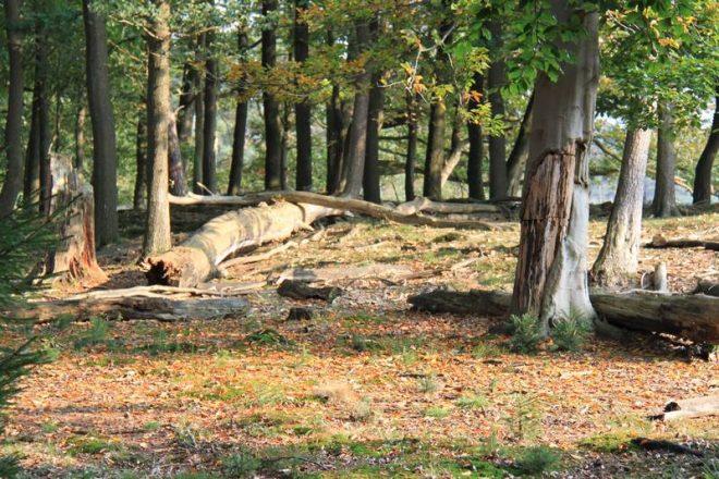 Drents Friesewold Fotograaf A T M Dongelmans 2