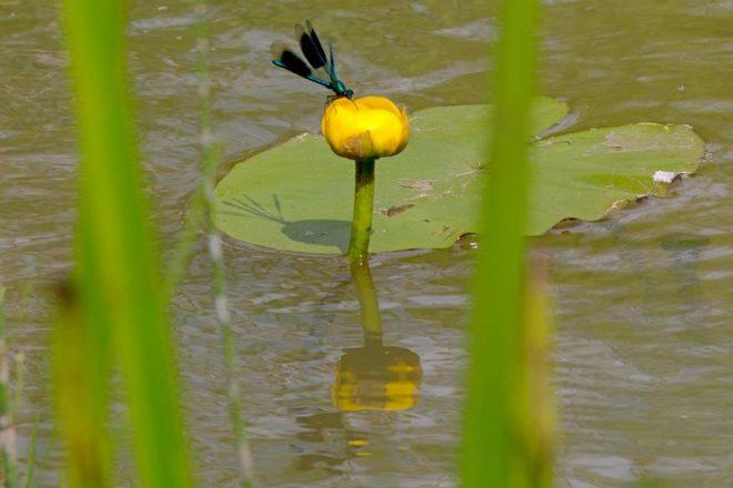 Gele Plomp Fotograaf Hendrik De Vos