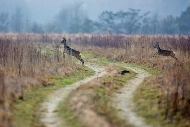Hertjes Fotograaf Hendrik De Vos