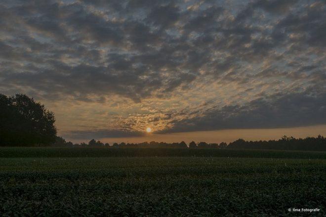 Zonsopkomst Over Bietenveld Wapse Fotograaf Ilma Meijer