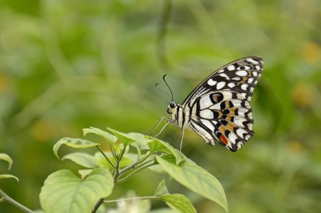 Close Up Van Vlinder Op Plant In Vlindertuin Havelte Fotograaf Leni Jacobs Vromans