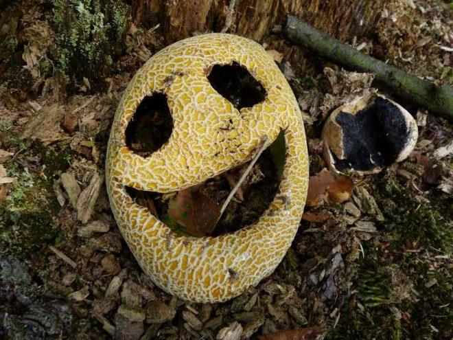 Halloween Paddenstoel Fotograaf Jet Van Ommen