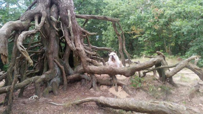 Hond Bij Een Kronkelboom Fotograaf Roelie Boshuizen
