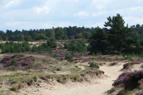 Drents Friese Wold Heide