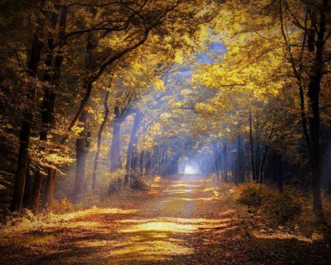 Fotograaf Arjanne Gols herfst in het Drents-Friese Wold