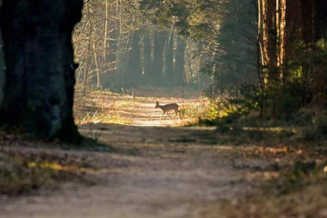 Fotograaf Baukje Vlasma Hertje In Het Bos