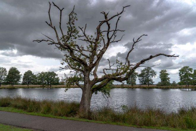 Fotograaf Bert Van Kordelaar Dwingelderveld