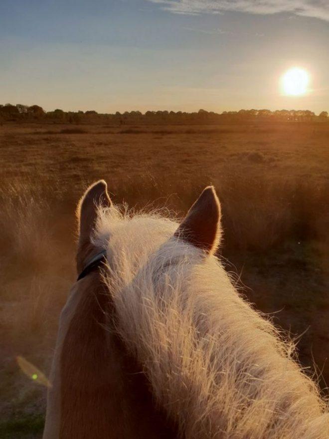 Fotograaf Esmee Oord Ondergaande Zon