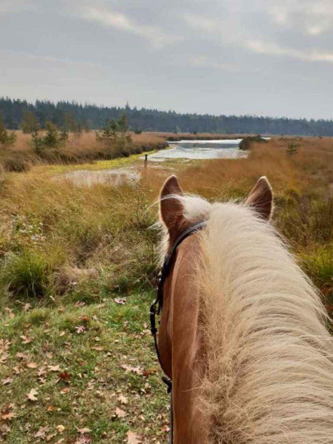 Fotograaf Esmee Oord over het hoofd van het Paard
