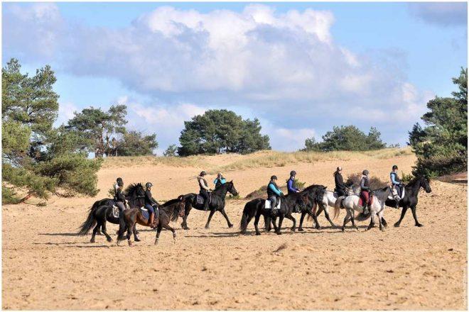 Fotograaf Joseph M Pattiapon Groep Paarden Aekingerzand