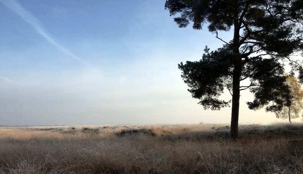 Camping Zonnekamp Heide Uitzicht