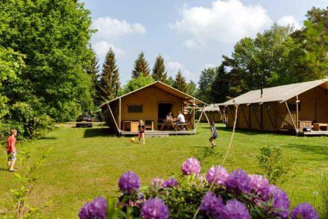 Vakantiepark De Roggeberg Safaritent De Wolde Lodge
