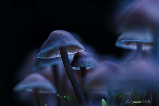 FotowedstrijdFotograaf Arjanne Gols