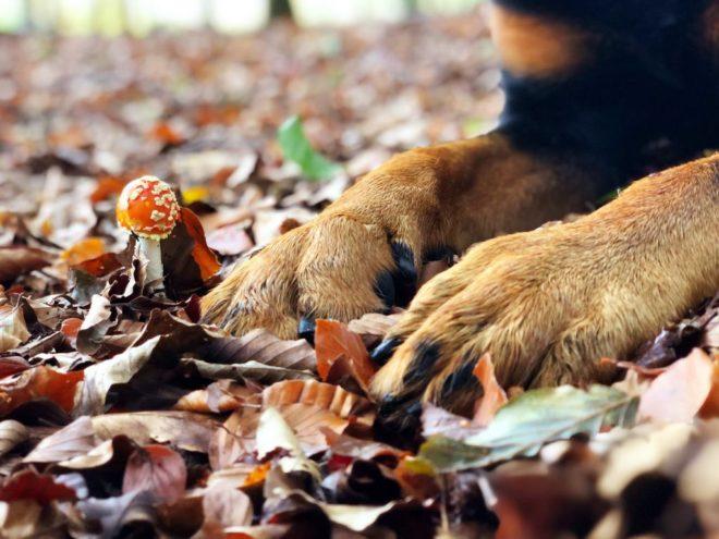 Hondenpoten op herfstbladeren nabij Appelscha