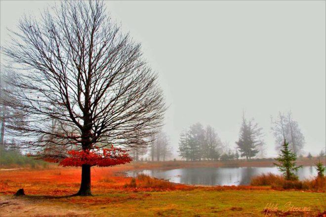 Aekingerzand herfst - Fotograaf Hilde Steensma