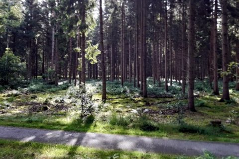 Drents Friese Wold Bos